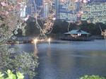 浜離宮 桜のライトアップ