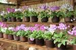 向島百花園「うつろいの花景色~初夏の野草に親しむ~」