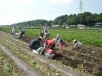 さつま芋収穫体験をしよう! ~楽しいよ、みんなでお芋堀り!~