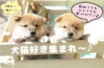 犬猫好きで盛り上がる♪【公務員or大卒or正社員男性】
