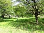 森林セラピー「一歩進んだ森林浴」の説明会とプチ体験 第41回