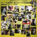 たま駅長と猫社員たちの写真展
