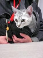 今日は猫ちゃんが来社