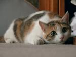 可愛い自慢のうちの猫!