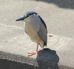 この鳥の名前を教えて下さい!