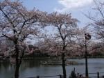 お花見情報 浮間公園