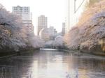 目黒川お花見クルーズ2012 プレゼント