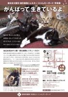 東日本大震災・被災動物シェルター『にゃんだーガード』写真展