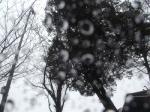 雨ですね(-
