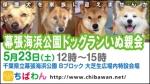 保護犬を家族に迎える譲渡会「ちばわん 幕張海浜公園ドッグランいぬ親会」