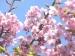お花見・桜コミュニティ