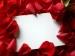 赤薔薇と白薔薇の会