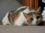 手伝って~・・・猫の手も借りたい位で・・・