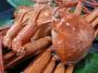 【紅ズワイガニ】境港産 紅ずわいがに 入荷しています。