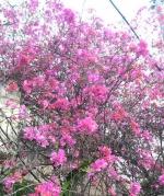花いっぱい in 沖縄道(沖縄自動車道)