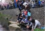 第13回 平瀬川桜祭りと稚鮎放流会のご案内