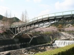 【桜・見ごろ】仁比山公園