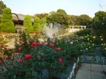 フラワーガーデンのバラ2