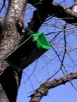 桜の木に「緑の小箱」?