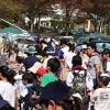 こどもの国 桜とひつじのフェスティバルのイメージ