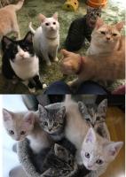 猫Cafeととの森で「猫クイズに挑戦!」