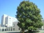 東京成徳大学八千代キャンパス・第6回OPEN CAMPUS(8月1日、日曜日、動画付き)!