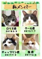 猫Cafeととの森「新入生入学♪」
