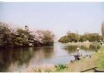 お花見情報 葛飾区水元公園