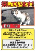 迷い猫:Qちゃんを探しています!