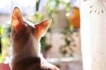 愛犬と毎日楽しい会話できていますか?~飼主の常識・愛犬の非常識~