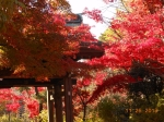 本土寺 絢爛!