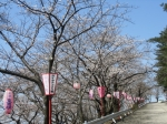 宮野山 桜まつり