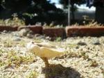 庭の砂にキノコ