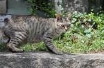 尾道で猫がたくさんいるスポット教えて!!