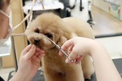 DOG&CAT JOKERグリーンスプリングス立川店